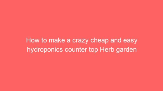 How to make a crazy cheap and easy hydroponics counter top Herb garden