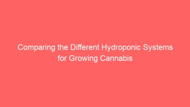Comparing the Different Hydroponic Systems for Growing Cannabis