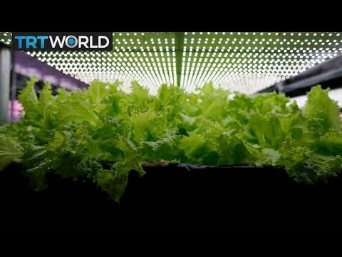 Vertical farming methods take root in Turkey | Money Talks