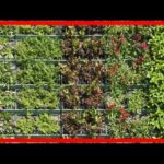 ¿Qué plantas conviene cultivar en un jardín vertical?