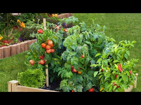 INCREDIBLE BACKYARD VEGETABLE GARDENING IDEAS