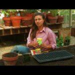 Vegetable Garden Ideas for Kids