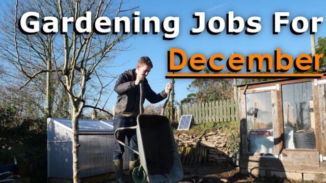 Gardening Jobs For December | Prepare for Next Season