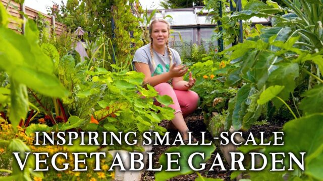 Massively Productive Small-Scale Suburban Vegetable Garden | Backyard Self-Sufficiency on a Budget