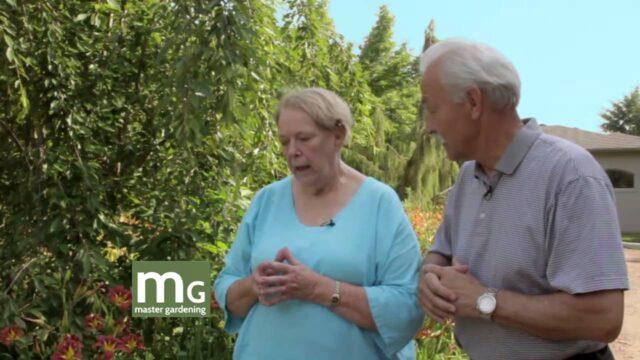 Master Gardening:  Daylilies