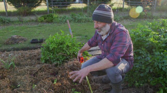 Vegetable Gardening in 1 Square Metre