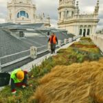 Ferrovial Services | Green roof on the Cibeles city hall building
