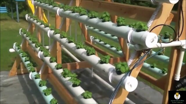 Hydroponics in India Low Cost Model #Basic Stracture #Hydroponic #farming #Agriculture