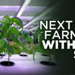 Is Indoor Farming Without Soil The Future? | Hydroponic Farming