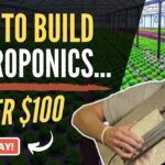 Building the Ultimate Hydroponics System (Under $100) Step-by-Step