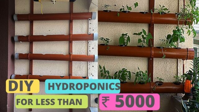 DIY hydroponics at HOME | Less than ₹5000. | Apartment balcony | Vertical Gardening using PVC pipe