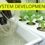 Root System Development Hydroponic Tower Lettuce