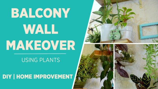 Balcony Wall Plant Makeover| Home Improvement