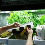 Adding Hydroponic Nutrients – Saturday Plant Talk