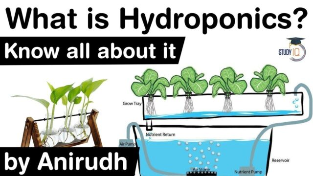What is Hydroponics? History of Hydroponics explained – Merits & Demerits of Hydroponics #UPSC #IAS