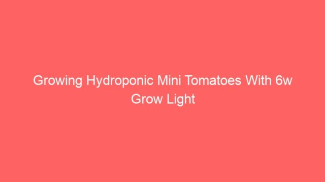 Growing Hydroponic Mini Tomatoes With 6w Grow Light