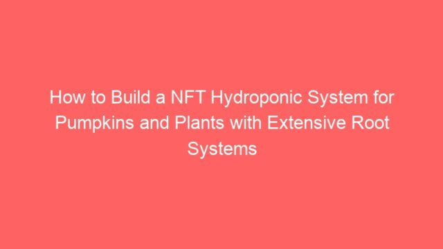 How to Build a NFT Hydroponic System for Pumpkins and Plants with Extensive Root Systems
