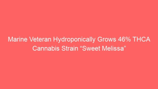 "Marine Veteran Hydroponically Grows 46% THCA Cannabis Strain ""Sweet Melissa"""