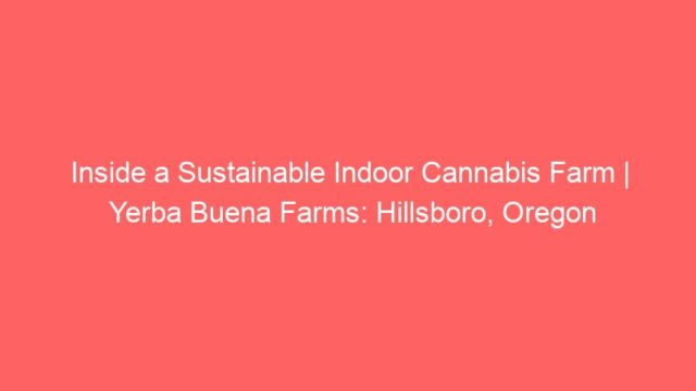 Inside a Sustainable Indoor Cannabis Farm | Yerba Buena Farms: Hillsboro, Oregon