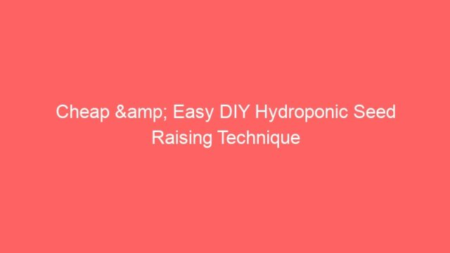 Cheap & Easy DIY Hydroponic Seed Raising Technique