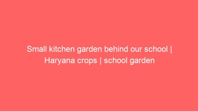Small kitchen garden behind our school | Haryana crops | school garden