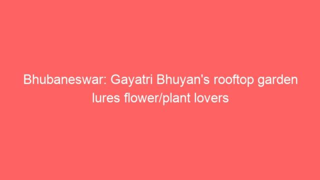 Bhubaneswar: Gayatri Bhuyan's rooftop garden lures flower/plant lovers