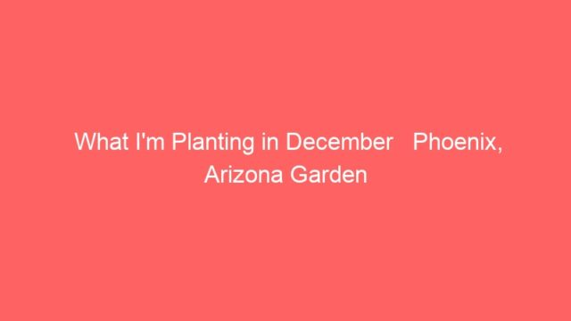 What I'm Planting in December   Phoenix, Arizona Garden