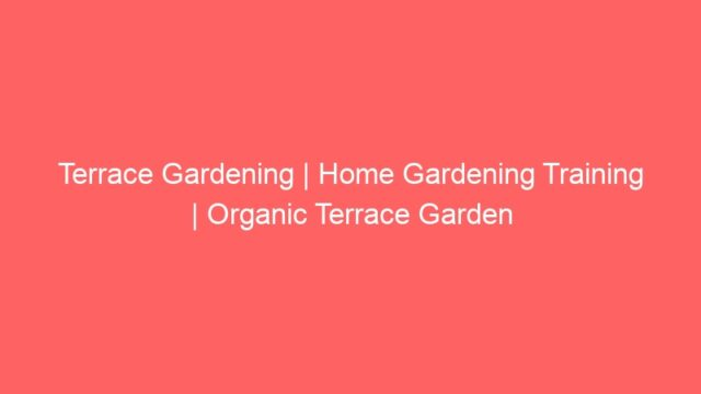 Terrace Gardening | Home Gardening Training | Organic Terrace Garden