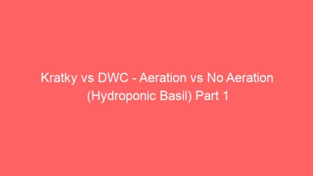 Kratky vs DWC – Aeration vs No Aeration (Hydroponic Basil) Part 1