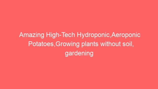 Amazing High-Tech Hydroponic,Aeroponic Potatoes,Growing plants without soil, gardening technology►1