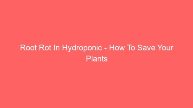 Root Rot In Hydroponic – How To Save Your Plants