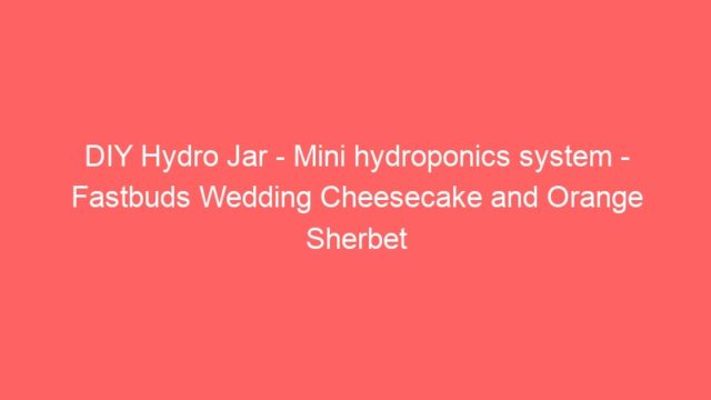 DIY Hydro Jar – Mini hydroponics system – Fastbuds Wedding Cheesecake and Orange Sherbet
