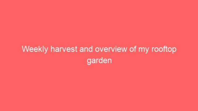 Weekly harvest and overview of my rooftop garden