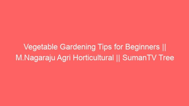Vegetable Gardening Tips for Beginners || M.Nagaraju Agri Horticultural || SumanTV Tree