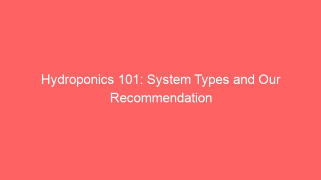 Hydroponics 101: System Types and Our Recommendation
