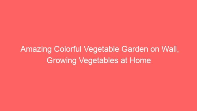 Amazing Colorful Vegetable Garden on Wall, Growing Vegetables at Home
