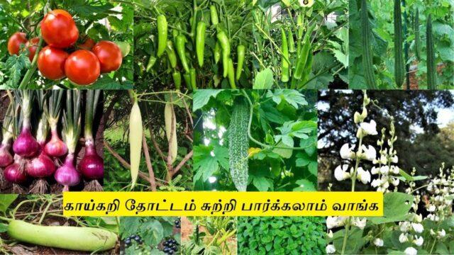 காய்கறி தோட்டம் சுற்றி பார்க்கலாம் வாங்க | Vegetable Garden Tour In Tamil | Mixed Vegetable Farm