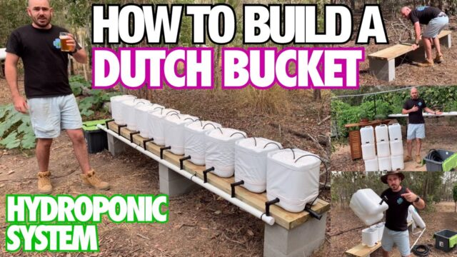 How to Build a Dutch Bucket Hydroponic System