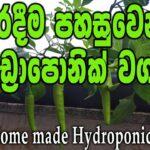 කුඩා හයිඩ්රපොනික් වගාවක් ගෙදරදීම | DIY Hydroponic system #hydroponics #soillessfarming