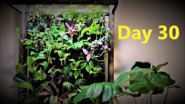DIY Living Wall Update 1 | Indoor Vertical Aquaponics | Propagating Houseplants
