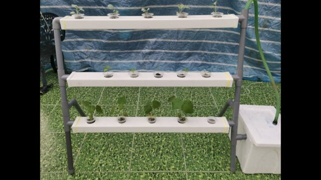 DIY Hydroponics : Easy Way To Build Your Own Hydroponic System At Home.