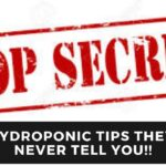 Hydroponic Tips They Never Tell You About