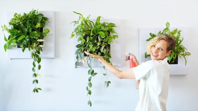 Live Frames With Plants – How To Install & Water