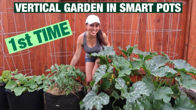 VERTICAL GARDEN IN SMART POTS – BEGINNER – SUBURBAN HOME GROWER