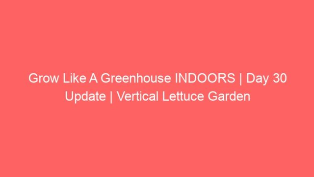 Grow Like A Greenhouse INDOORS | Day 30 Update | Vertical Lettuce Garden