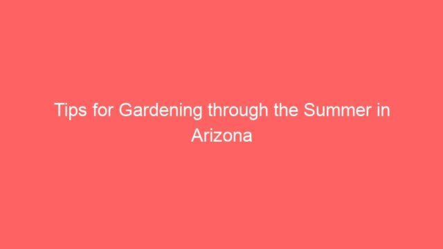 Tips for Gardening through the Summer in Arizona