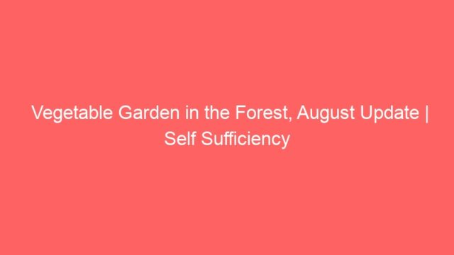 Vegetable Garden in the Forest, August Update | Self Sufficiency