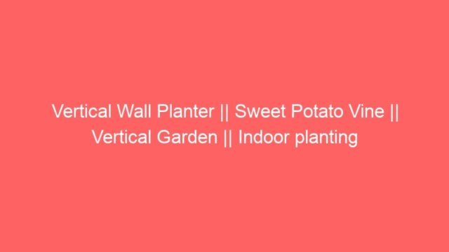Vertical Wall Planter || Sweet Potato Vine || Vertical Garden || Indoor planting
