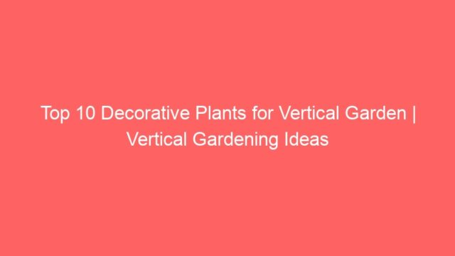 Top 10 Decorative Plants for Vertical Garden | Vertical Gardening Ideas