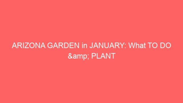 ARIZONA GARDEN in JANUARY: What TO DO & PLANT